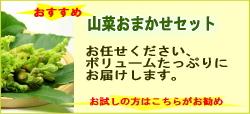 山菜おまかせセット