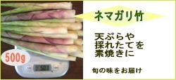 ネマガリ竹